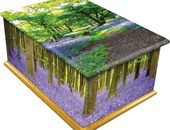 Bluebell Wood Design Casket