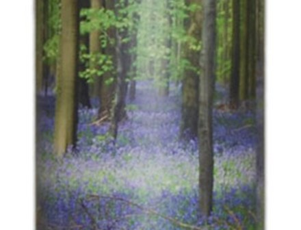 Scatter Tube - Bluebell Wood